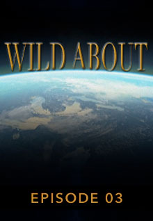 Poster featuring the earth's curve from space serves as a link to the Wild About Episode 3 page