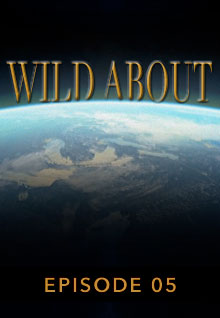 Poster featuring the earth's curve from space serves as a link to the Wild About Episode 5 page