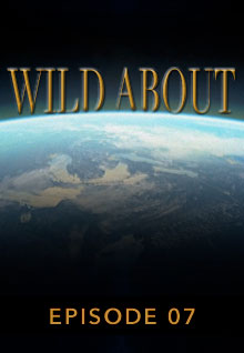 Poster featuring the earth's curve from space serves as a link to the Wild About Episode 7 page