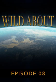 Poster featuring the earth's curve from space serves as a link to the Wild About Episode 8 page