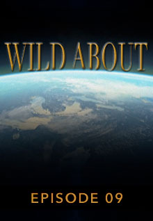 Poster featuring the earth's curve from space serves as a link to the Wild About Episode 9 page