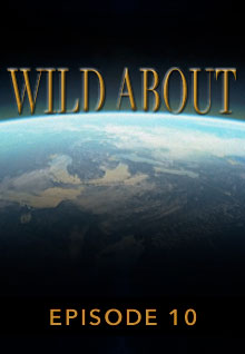 Poster featuring the earth's curve from space serves as a link to the Wild About Episode 10 page