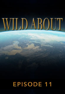 Poster featuring the earth's curve from space serves as a link to the Wild About Episode 11 page