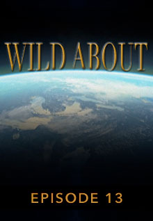 Poster featuring the earth's curve from space serves as a link to the Wild About Episode 13 page