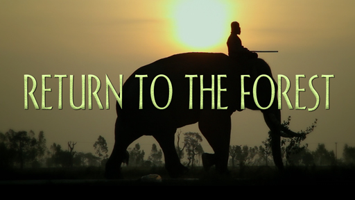 Photo of a man riding an elephant serves as a link to the Return to the Forest film page