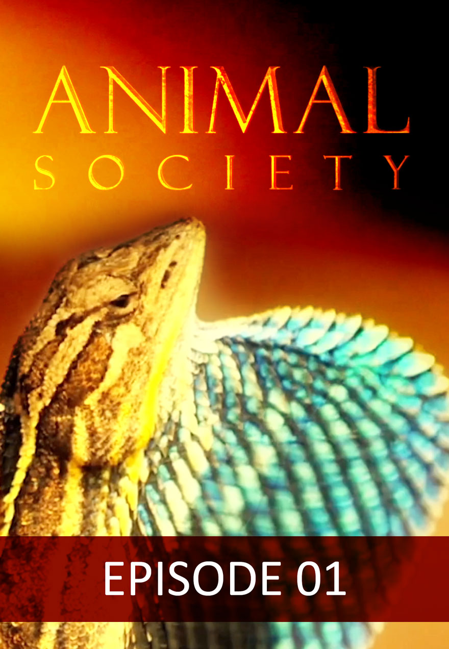 Poster of a lizard serves as a link to the Animal Society Episode 1 film page