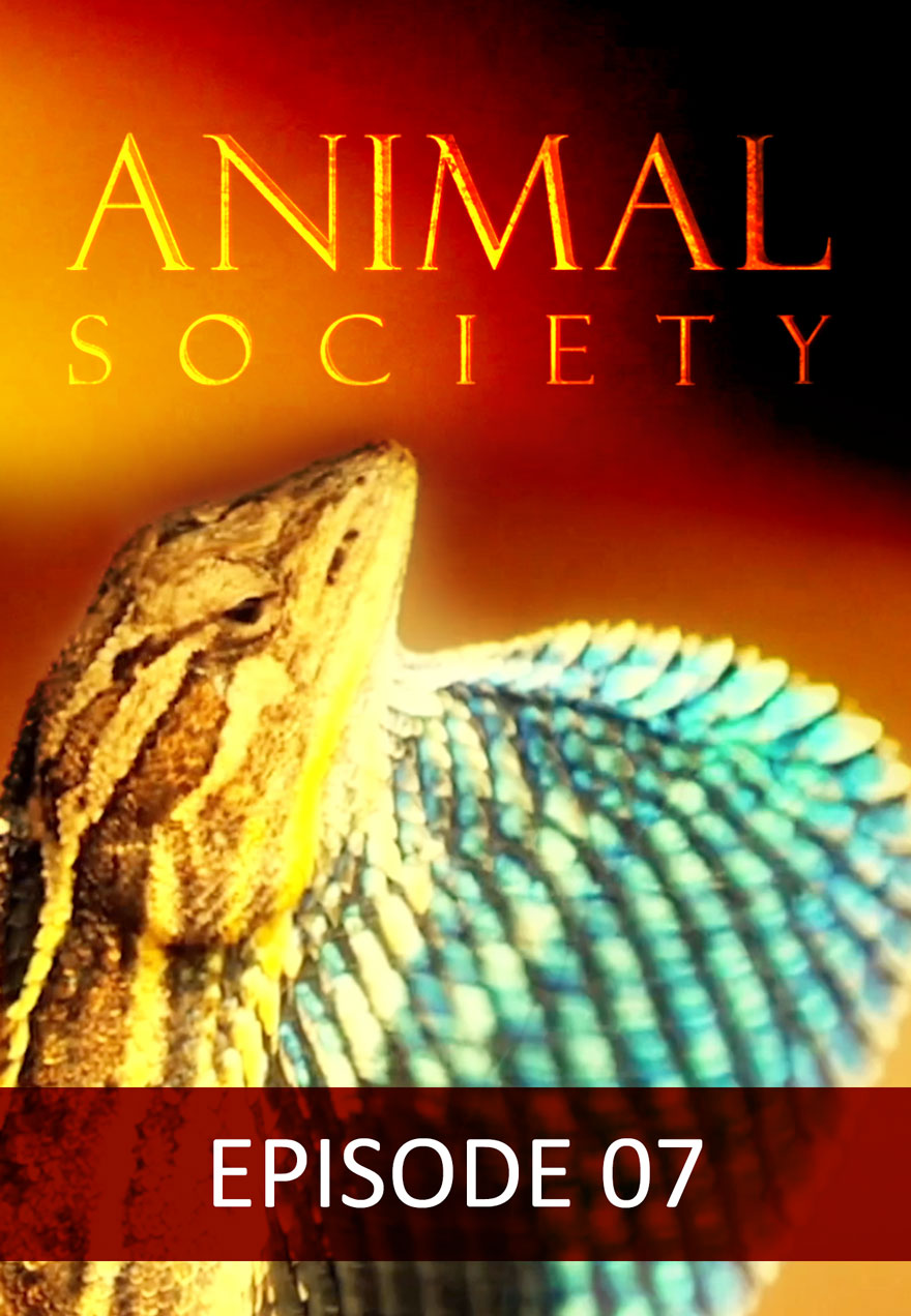 Poster of a lizard serves as a link to the Animal Society Episode 7 film page