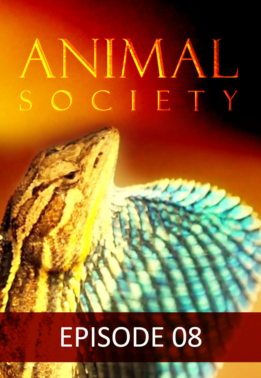 Poster of a lizard serves as a link to the Animal Society Episode 8 film page