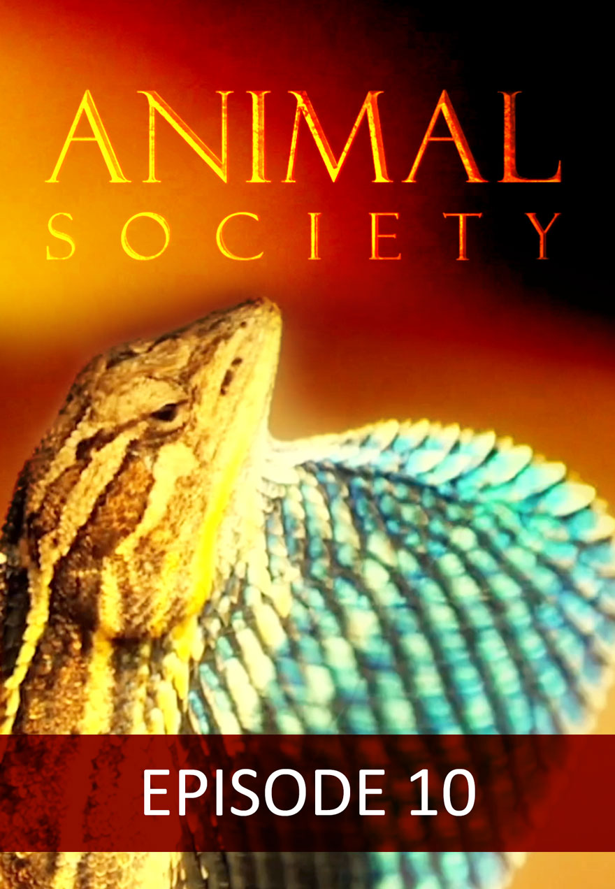 Poster of a lizard serves as a link to the Animal Society Episode 10 film page