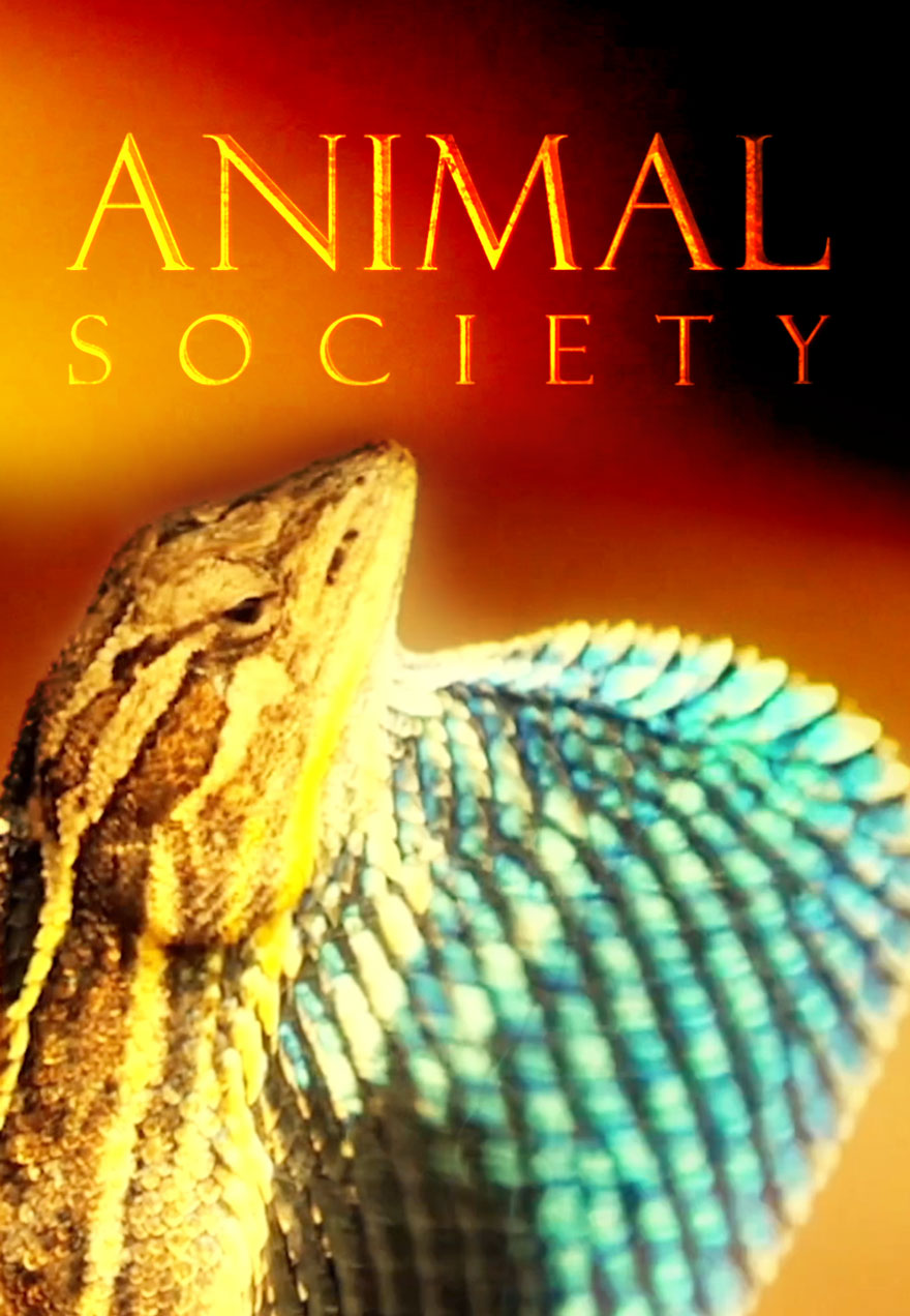 Poster of a lizard serves as a link to the Animal Society series page