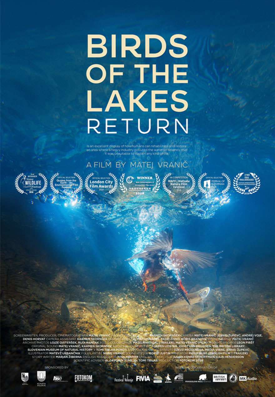 Poster of a bird underwater grabbing a fish serves as a link to the Birds of the Lakes Return film page