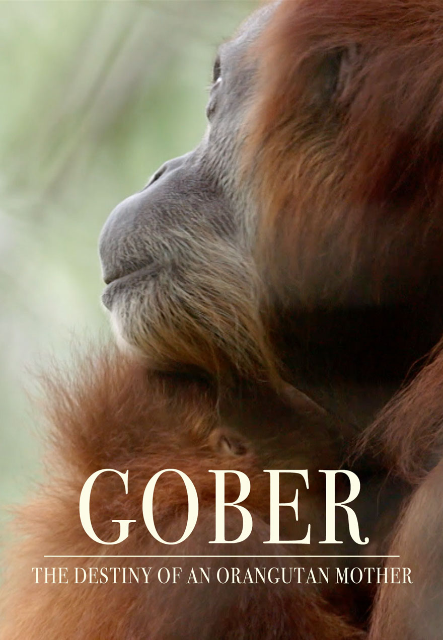 Poster of an orangutan serves as a link to the Gober film page