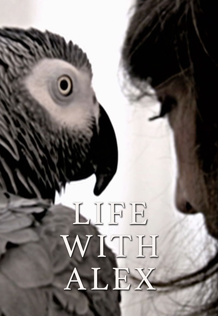 Poster of a parrot's head serves as a link to the Life With Alex film page