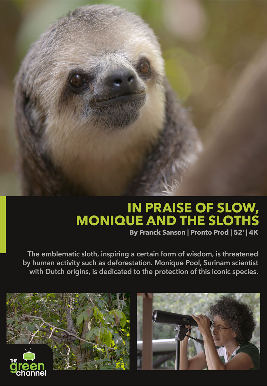 Poster of a cute sloth serves as a link to the In Praise of Slow, Monique and the Sloths film page