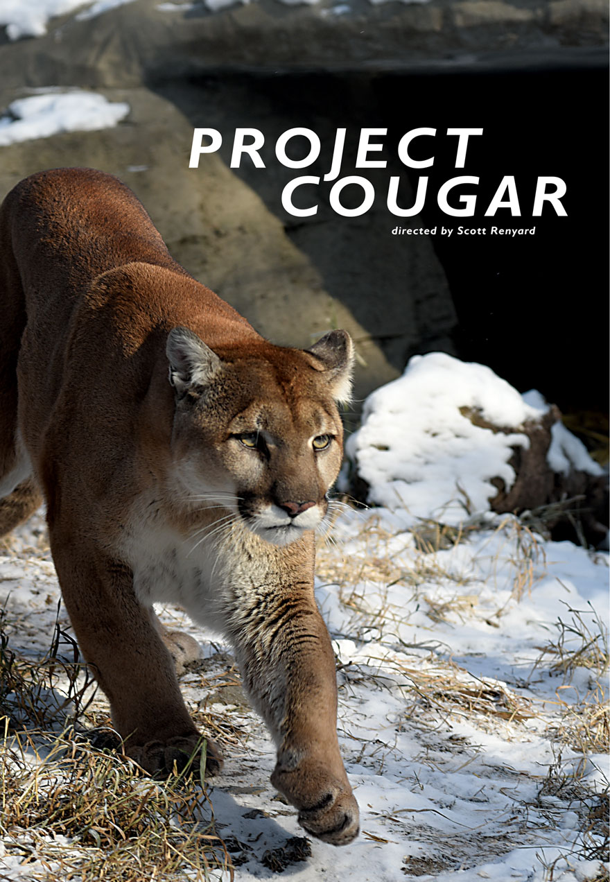 Poster of a prowling cougar serves as a link to the Project Cougar film page