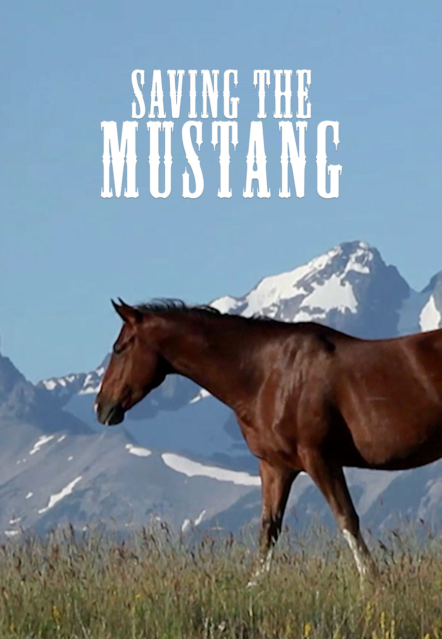 Poster of a wild horse serves as a link to the Saving the Mustang film page