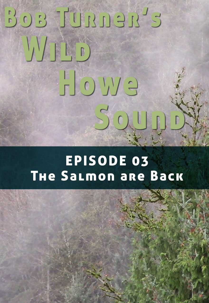 Poster of a watershed serves as a link to Bob Turner's Wild Howe Sound Episode 3 film page