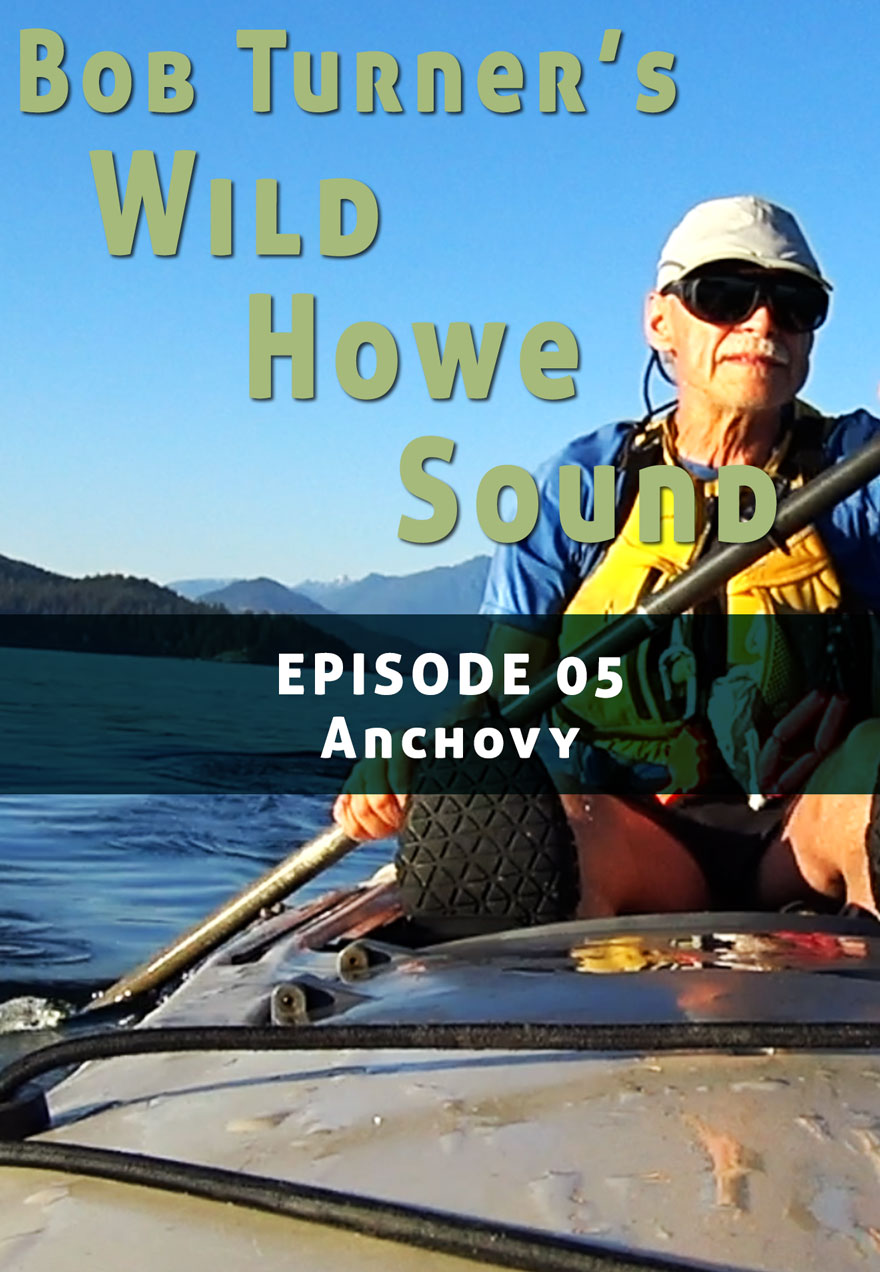 Poster of a man kayaking serves as a link to Bob Turner's Wild Howe sound Episode 5 film page