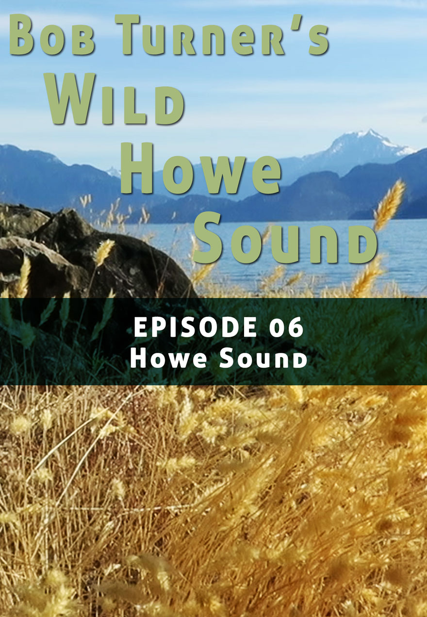 Poster of dry grass and landscape serves as a link to Bob Turner's Wild Howe sound Episode 6 film page