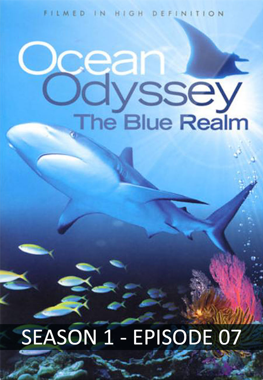 Ocean Odyssey The Blue Realm poster acts as link to seaon 1 episode 7