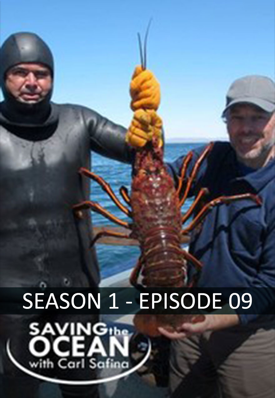 Saving the Ocean season 1 episode 9 poster acts a link to episode page