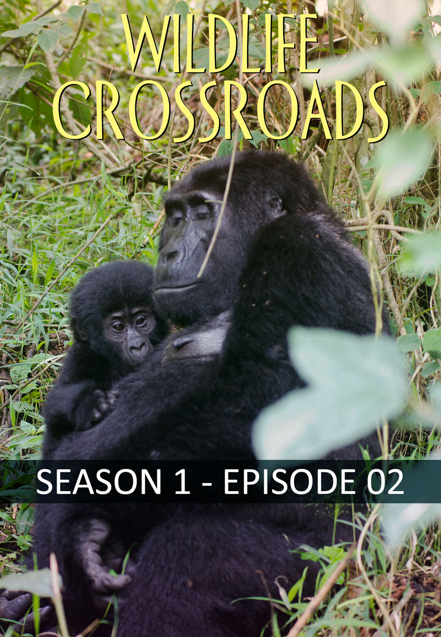 Wildlife Crossroads poster used for link to and page image season 1 episode 2