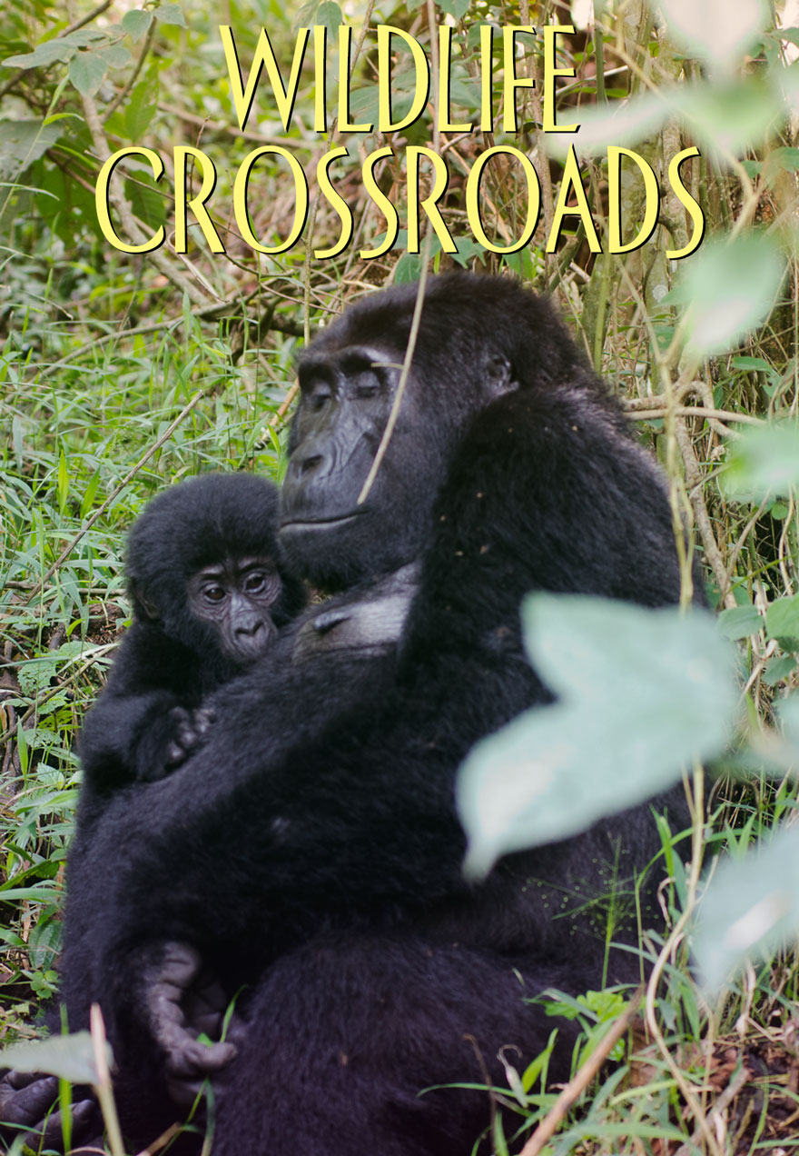 Wildlife Crossroads poster used as icon link to and page image on film page