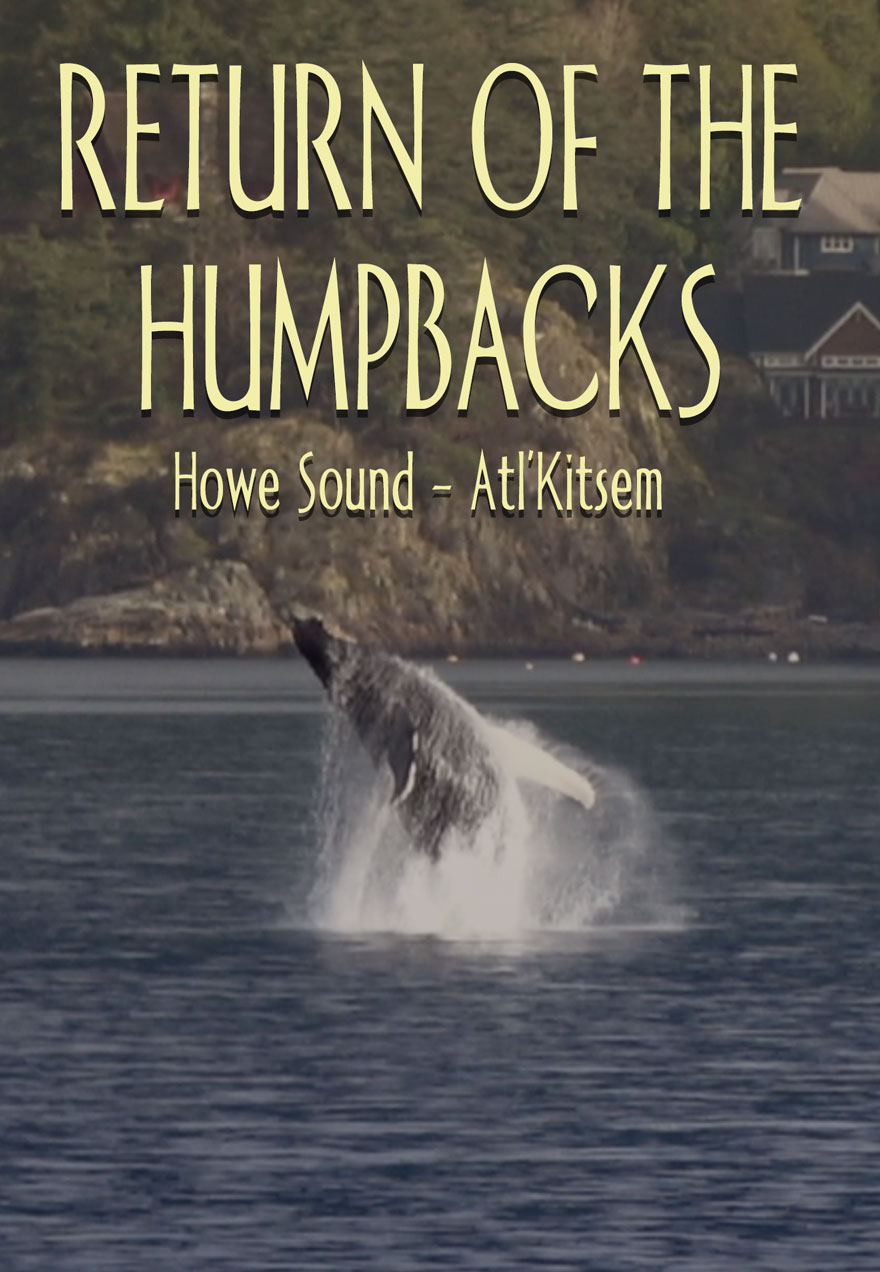 Poster of a humpback whale's fluke in midair with the Howe Sound in the background with the film's name serves as a link to the Return of the Humpbacks film page