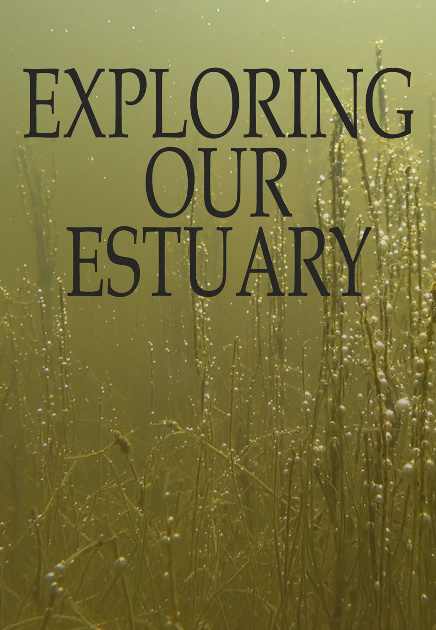 poster of an estuary underwater with the film's name serves as a link to Exploring Our Estuary film page on The Green Channel