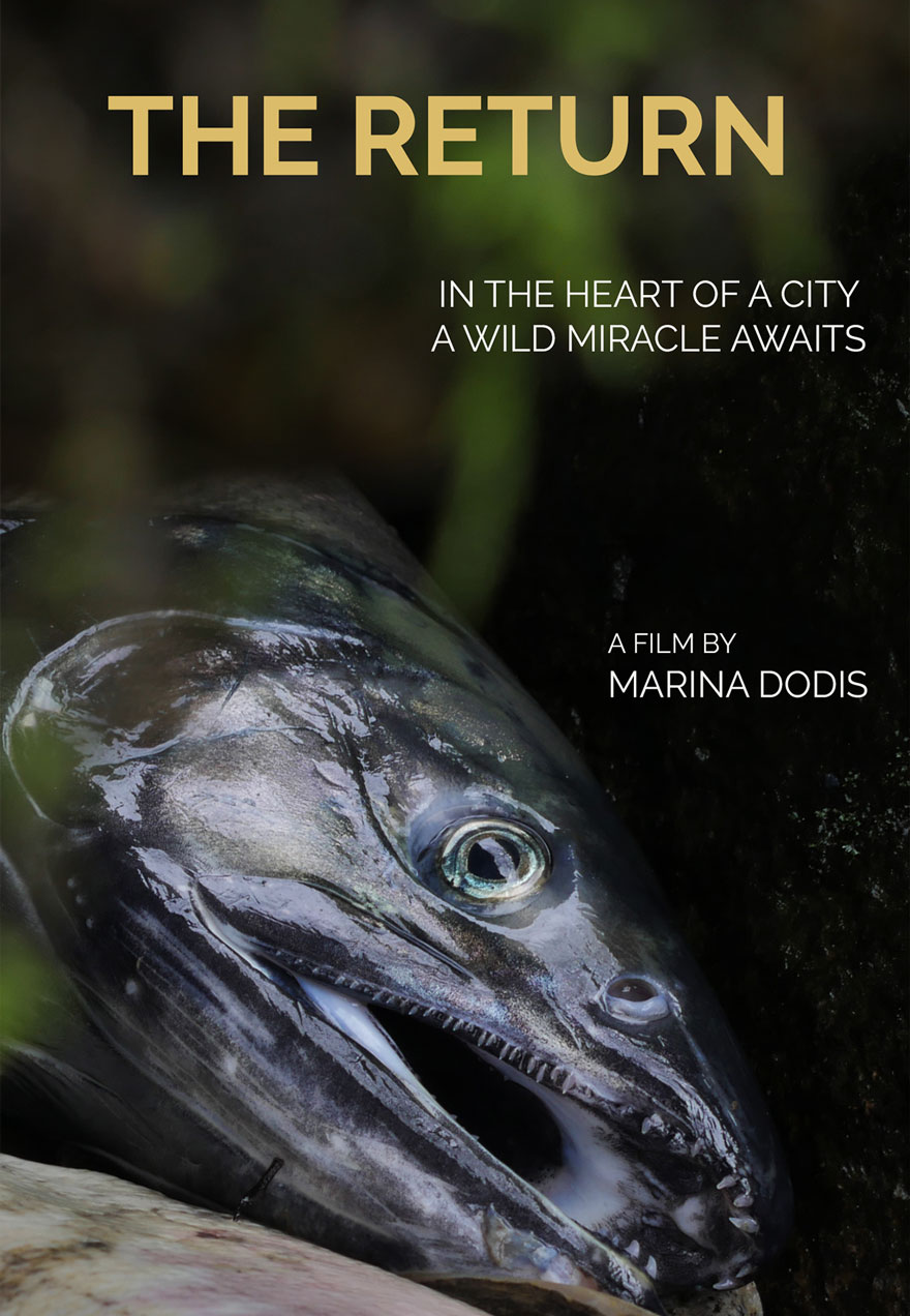 poster of a salmon head with the film's name serves as a link to The Return film page