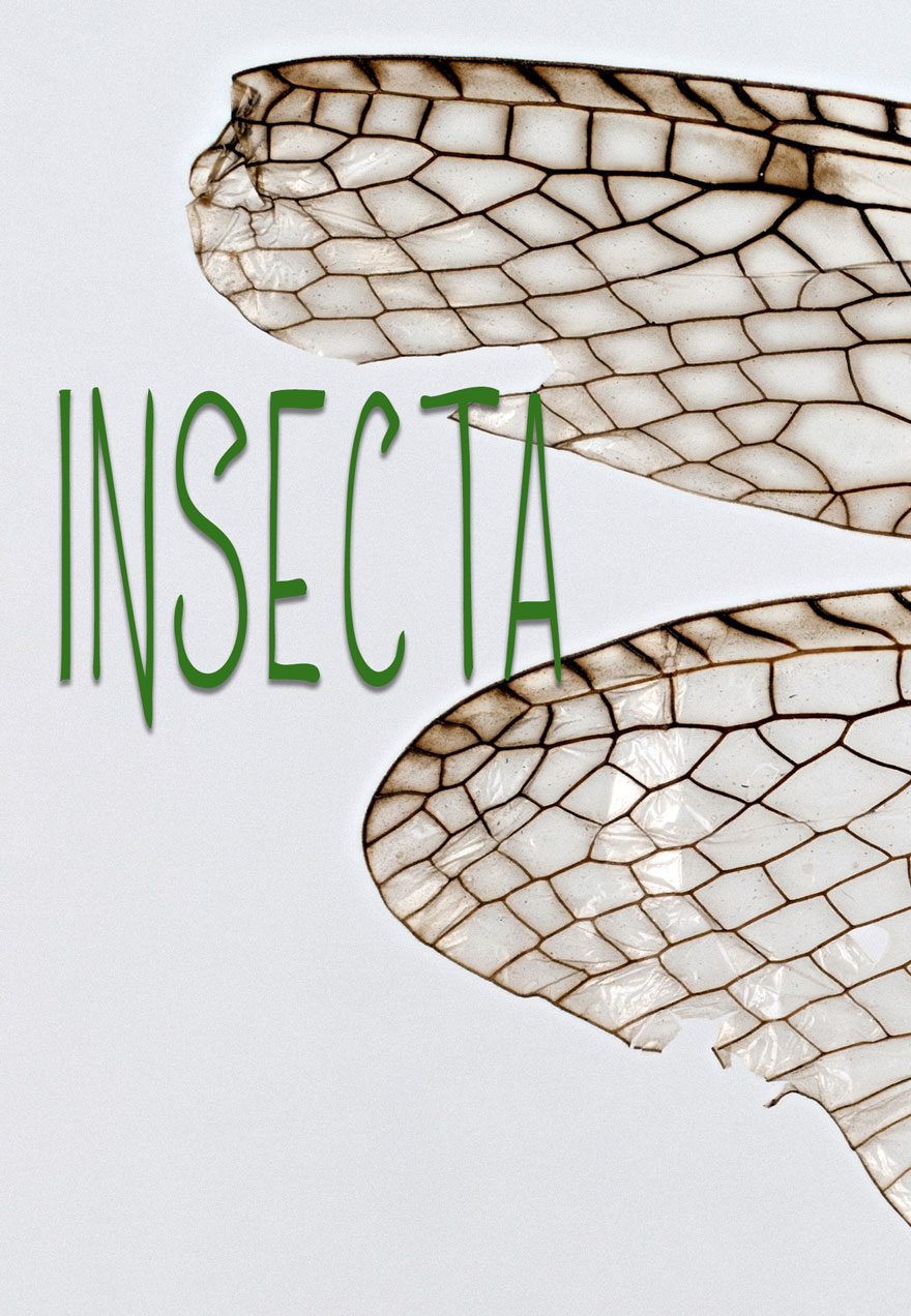 poster of an insect wing with the title of the film which acts as a link to the Insecta film page