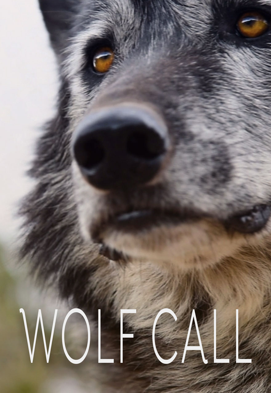 poster of a close up of a wolf's face which acts as a link to the WOLF CALL film page