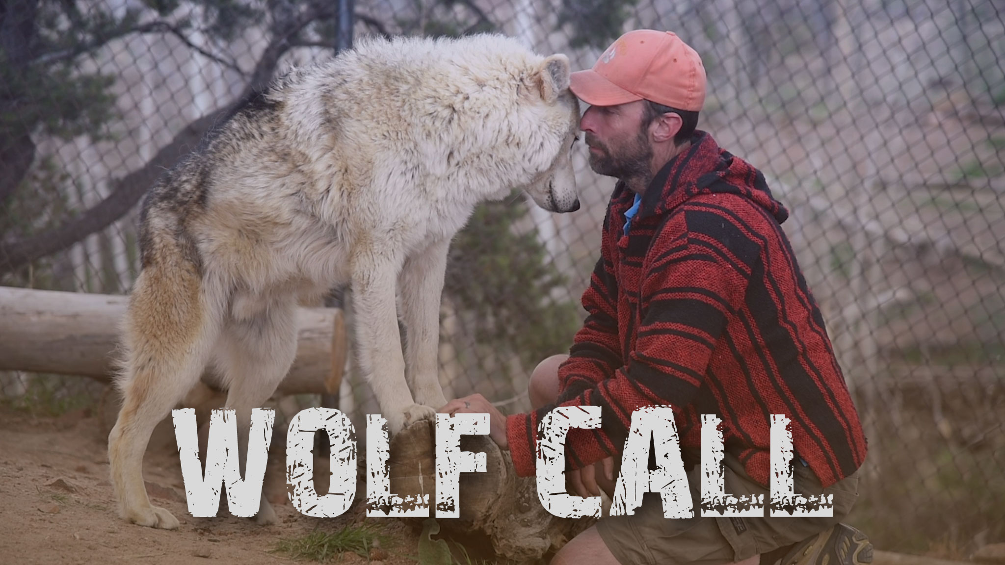 photo of a man close by and whispering to a wolf